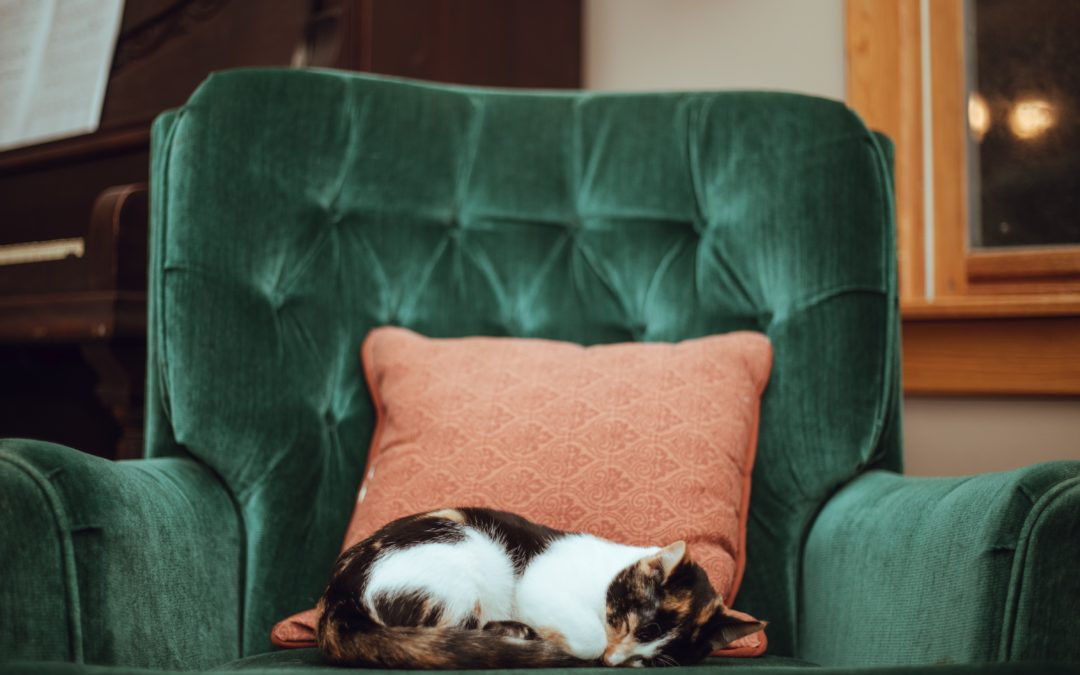 Relocating Consumers Focus on Pets' Happiness Too